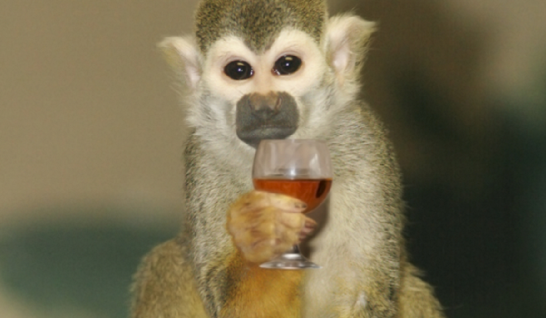 alcohol consumption missouri #1 USA Rhythm & Booze monkey drinking