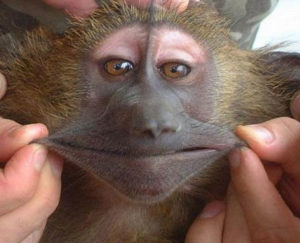 reviews people like us Rhythm_&_Booze_Kansas City funny monkey